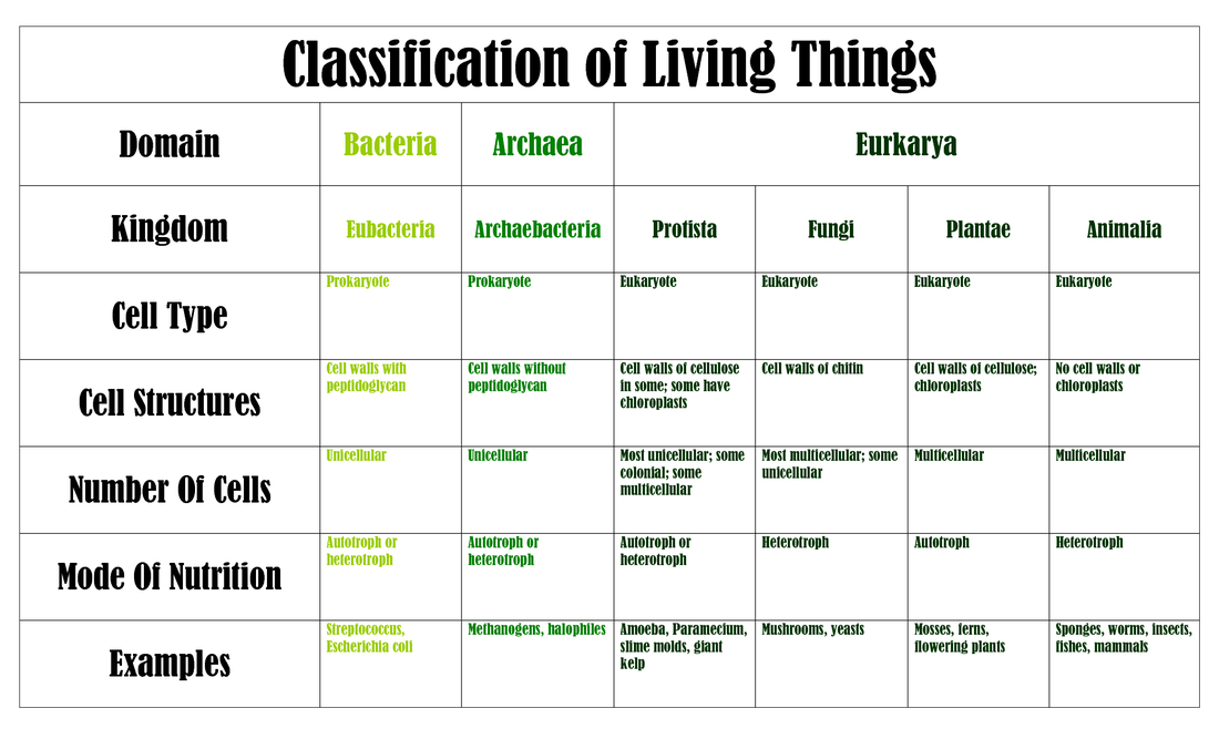 Biology The Organization of Life On Beyond Z – Classification of Living Things Worksheet