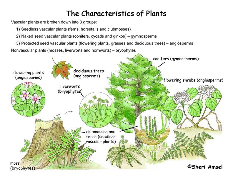 Biology Plants On Beyond Z